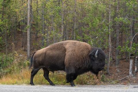 9-16-20-Yellowstone-9307