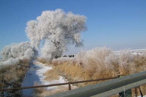 Ice-Tree
