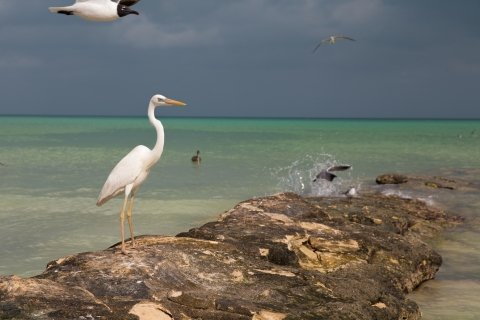 Still-Life-with-Great-Egret
